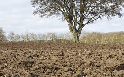 O seguro contribui para uma agricultura mais resiliente