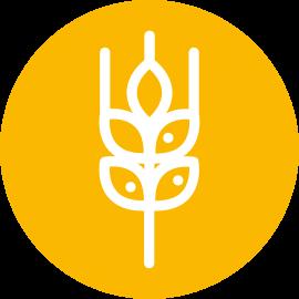 Icono Trigo